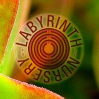 Labyrinth Nursery