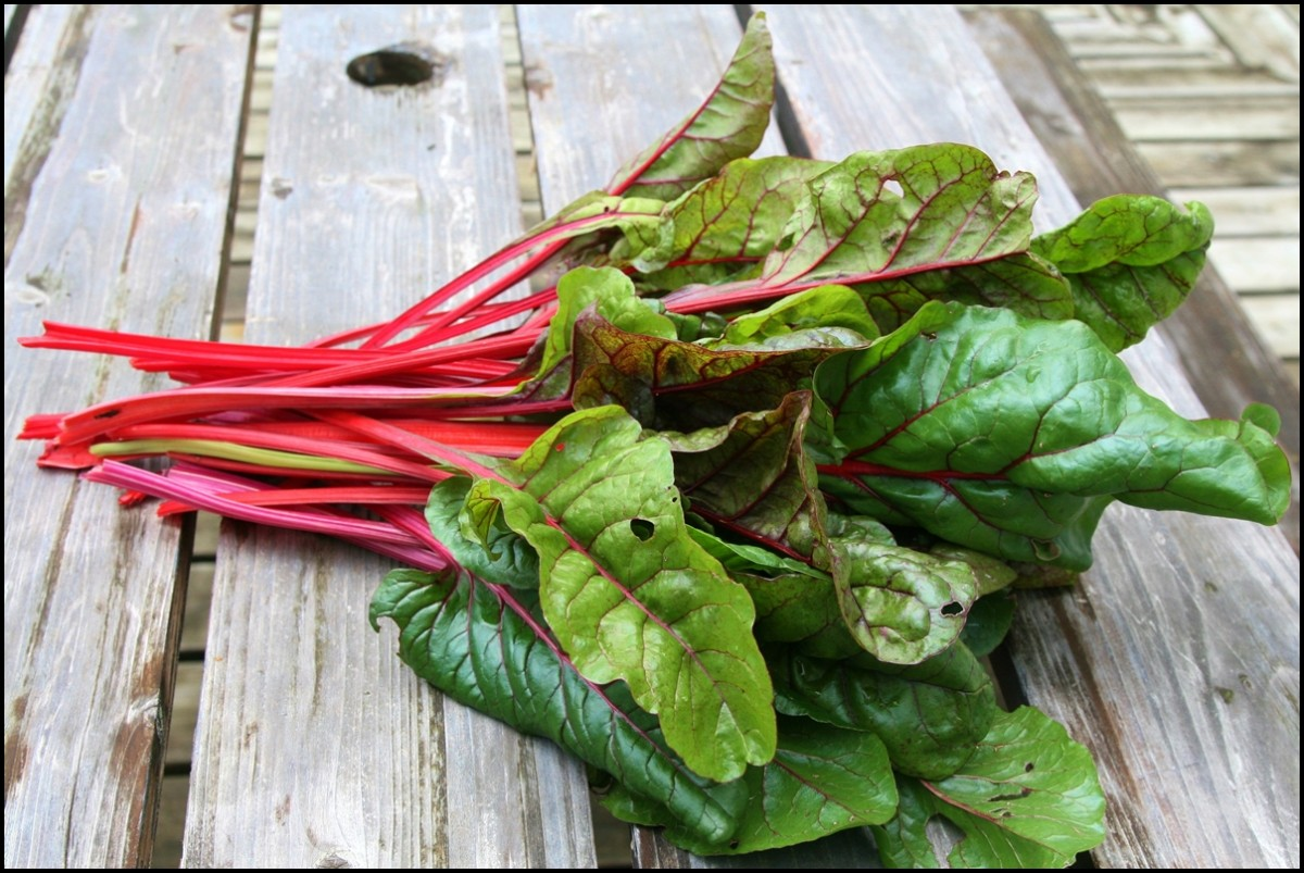 This is an image of swiss chard