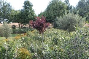BN 2 Olive groves