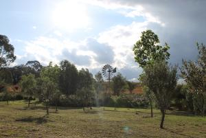 BN2 Olive groves