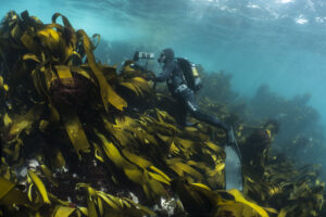 Photo of kelp forest