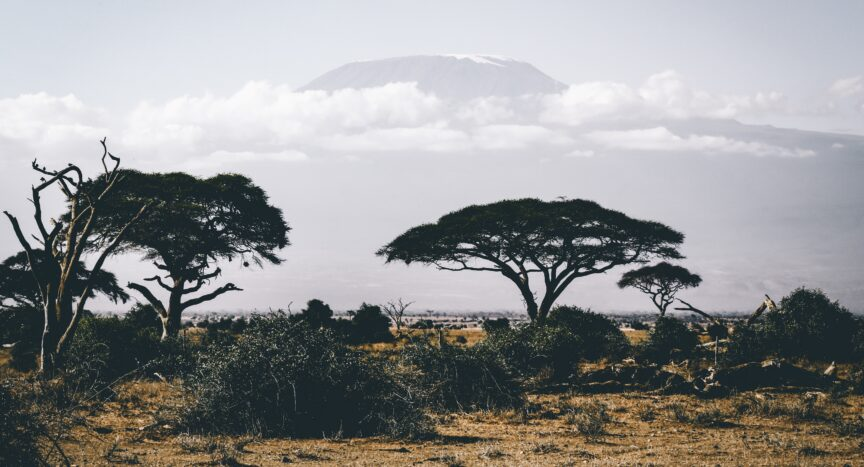 photo of African landscape