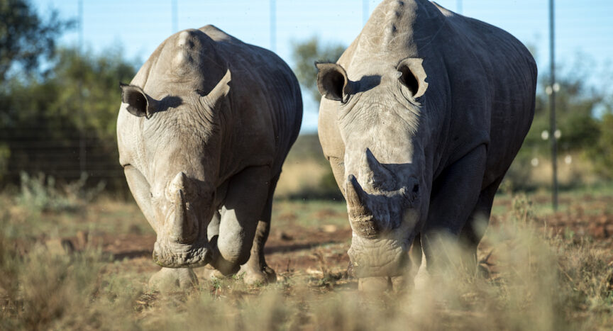 Photo of African Rhinos