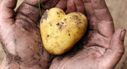 photo of potato cradled in palms