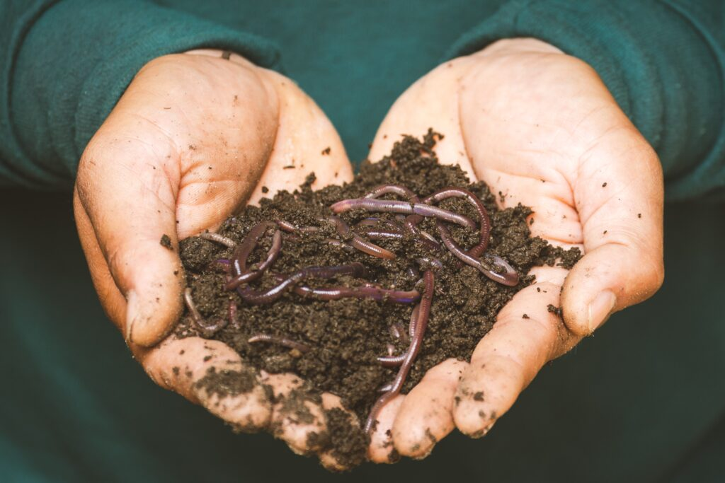 photo of compost in cupped hands