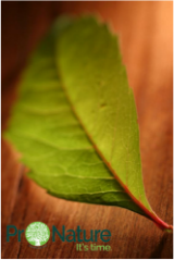 photo of green leaf