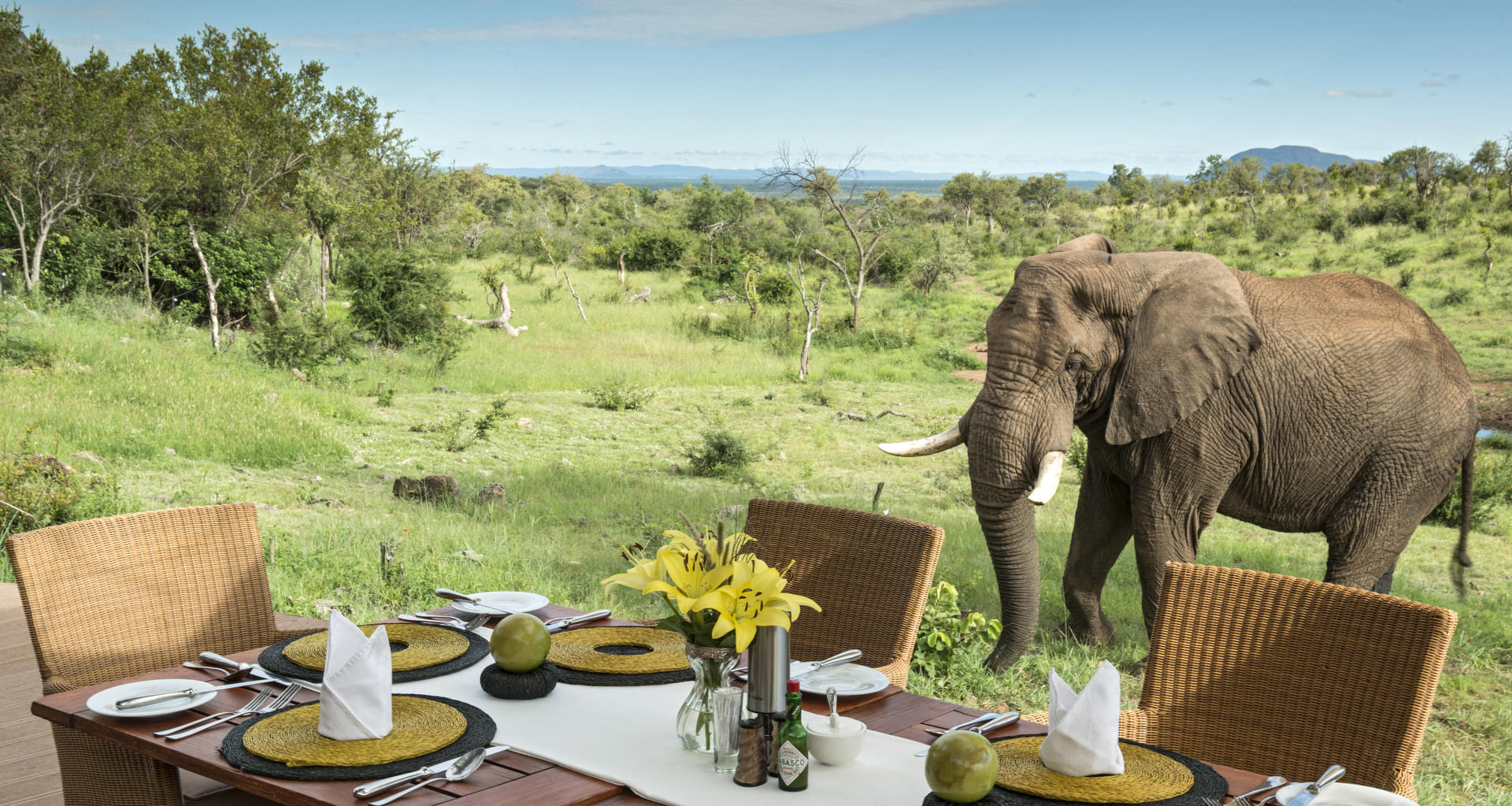 photo of elephant at camp
