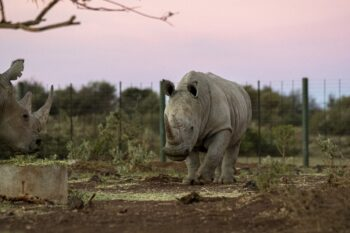 photo of rhino
