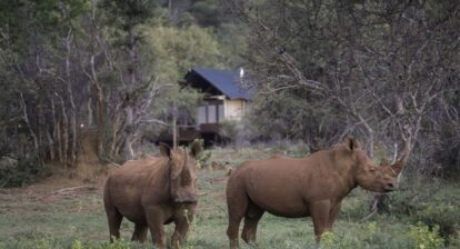 photo of rhino's