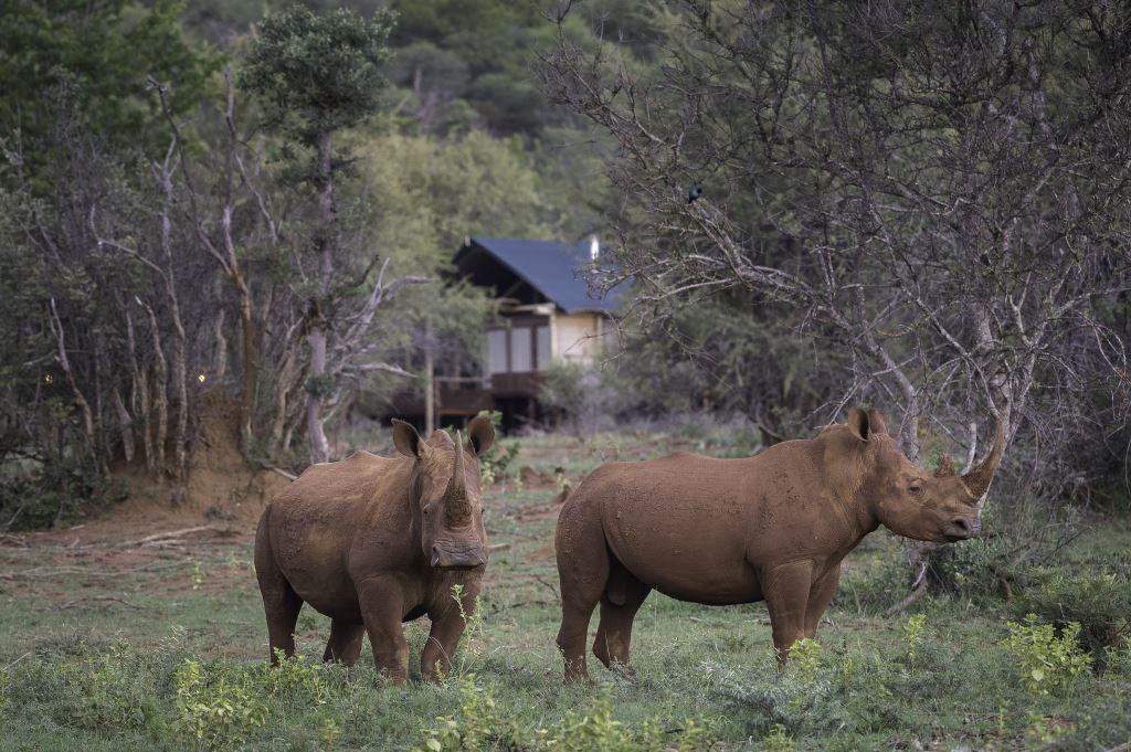 photo of rhino's