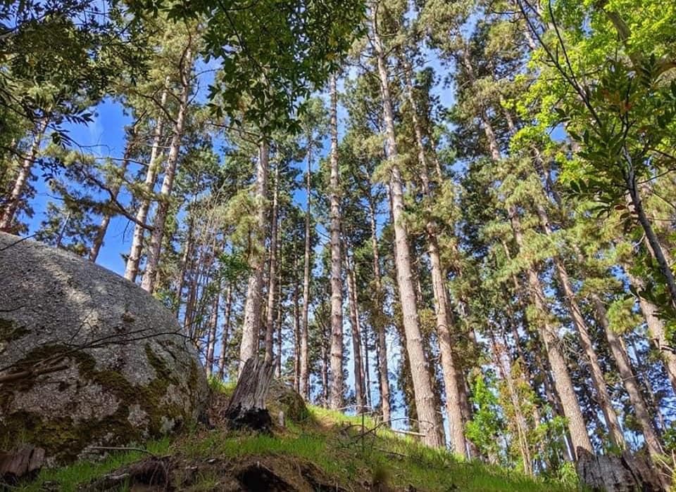 Parkscape Forest
